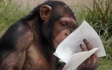 chimpancé 9